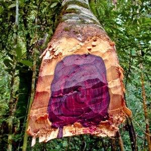 Exemple de bois de rose